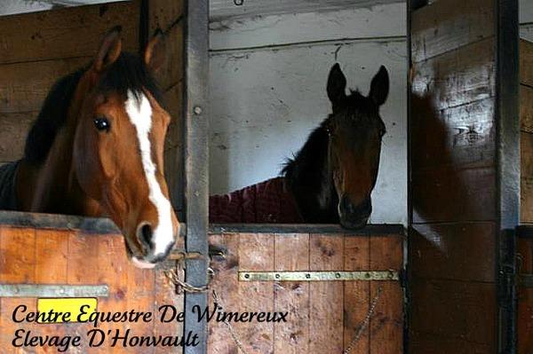 poney wimereux